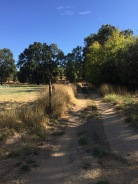 The driveway to Yerba Santa Goat Dairy