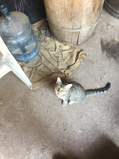 Tigress, the orphan who adopted the farm